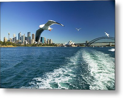 Seagulls Over Sydney Harbor Metal Print