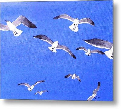 Seagulls Overhead Metal Print