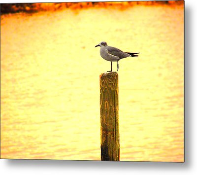 Seagulls Sunset Metal Print