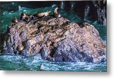 Metal Print featuring the photograph Seal  Rock by Jonny D