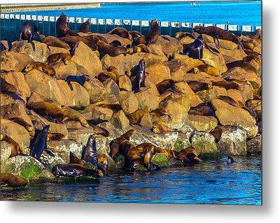 Seals On Jetty Rocks Metal Print by Garry Gay