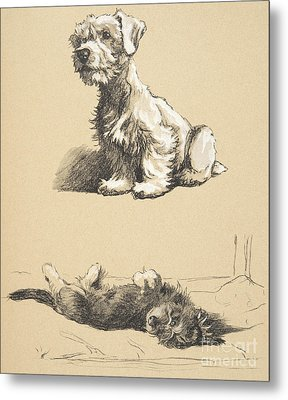 Sealyham And Rough Dachund Puppy, 1930 Metal Print