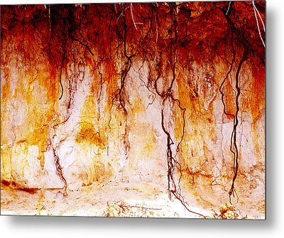 Searching Metal Print by Holly Kempe