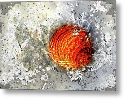 Seashell Art  Metal Print by HH Photography of Florida