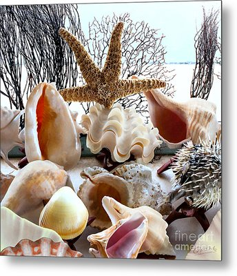 Seashell Galore Metal Print