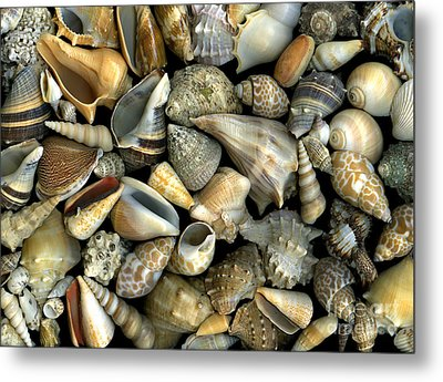 Seashell Medley Metal Print by Christian Slanec