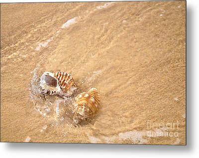 Seashell Turbulence Metal Print by Kaye Menner