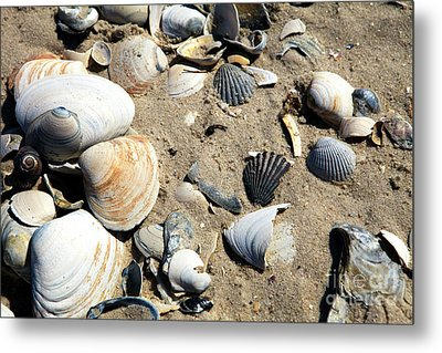 Metal Print featuring the photograph Seashells by John Rizzuto