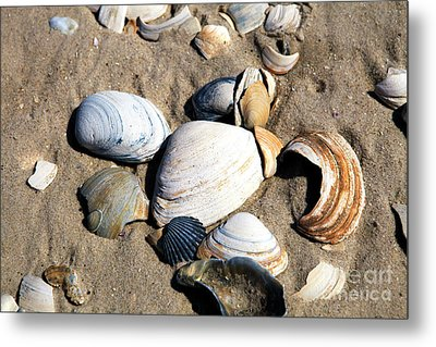 Metal Print featuring the photograph Seashells On The Beach by John Rizzuto
