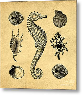 Seashells Vintage Metal Print by Edward Fielding