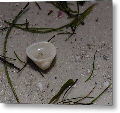 Seashore Treasures In White Metal Print