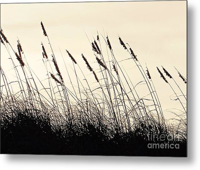 Seaside Oats Metal Print
