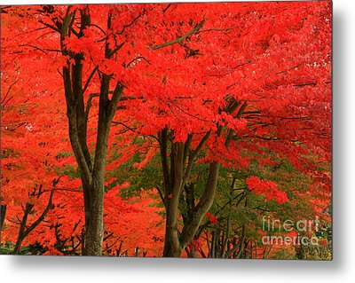 Season's Change Metal Print