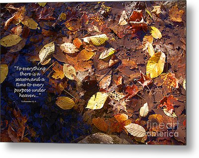 Metal Print featuring the photograph Seasons by Diane E Berry