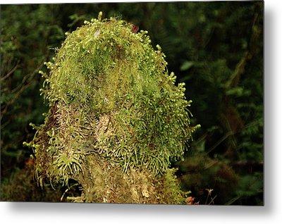 Seasons Of Magic - Hoh Rainforest Olympic National Park Wa Metal Print by Christine Till