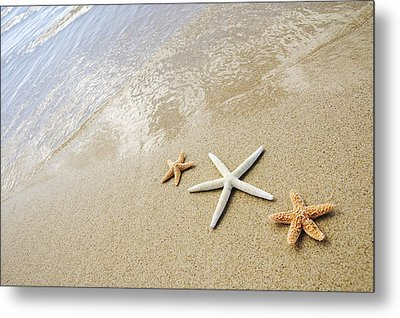 Seastars On Beach Metal Print by Mary Van de Ven - Printscapes