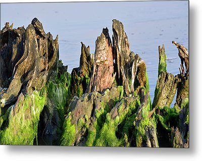 Seaweed-covered Beach Stump Mountain Range Metal Print by Bruce Gourley