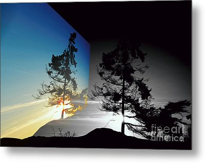 Sechelt Tree Metal Print
