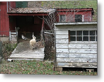 Secure Metal Print by William Albanese Sr