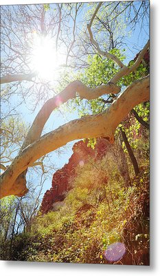 See The Light Metal Print by Kate Livingston