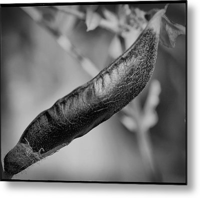 Metal Print featuring the photograph Seed Pod by Keith Elliott