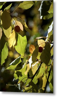 Seed Pods In The Fall Metal Print