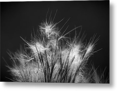 Seeds Of Life Metal Print by Marvin Spates