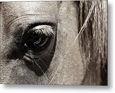 Stillness In The Eye Of A Horse Metal Print by Marilyn Hunt