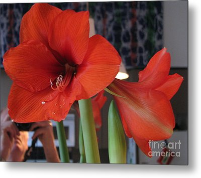 Metal Print featuring the photograph Self Portrait With Amaryllis by Erik Falkensteen