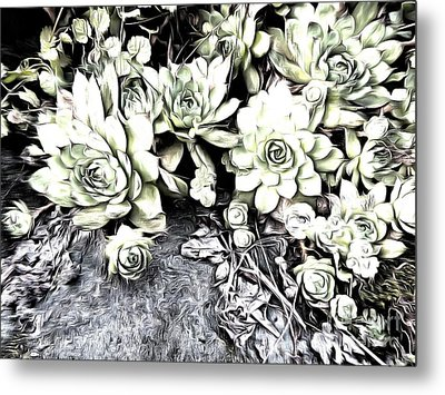 Metal Print featuring the photograph Sempervivum - Ebony And Ivory  by Janine Riley