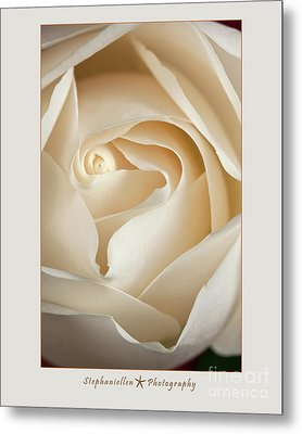 Sensual White Rose Metal Print by Stephanie Hayes