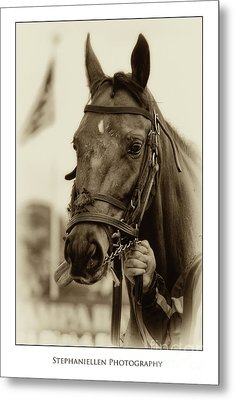 Sephia Racehorse Metal Print by Stephanie Hayes