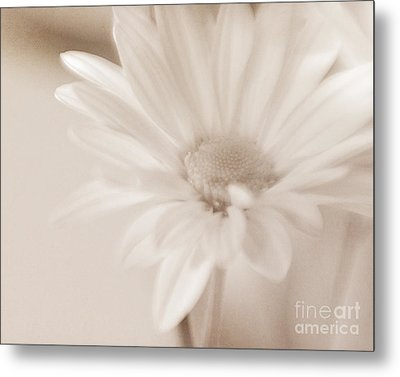 Sepia Daisy Metal Print by Lisa McStamp