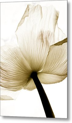 Sepia Poppy Flower Metal Print