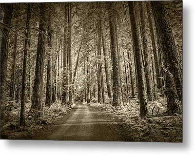 Sepia Tone Of A Road In A Rain Forest Metal Print by Randall Nyhof
