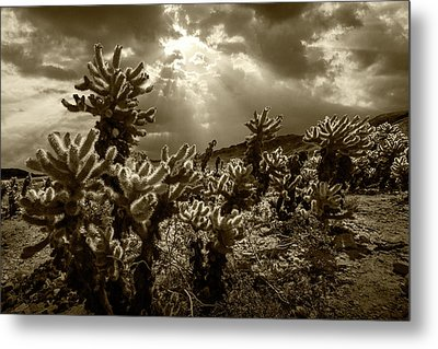 Metal Print featuring the photograph Sepia Tone Of Cholla Cactus Garden Bathed In Sunlight by Randall Nyhof