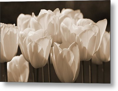Sepia Tulips Metal Print by Karla DeCamp