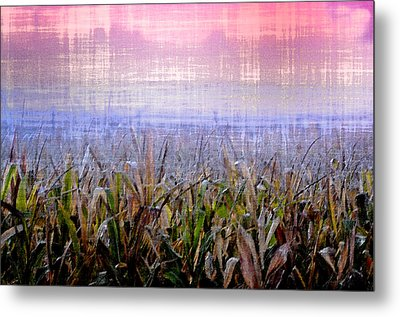 September Cornfield Metal Print by Bill Cannon