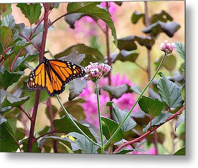 September Monarch Metal Print by Janis Nussbaum Senungetuk
