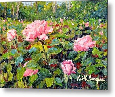 September Roses Metal Print by Keith Burgess