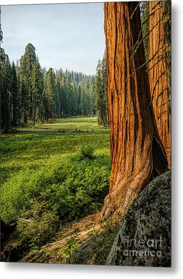 Sequoia Np Crescent Meadows Metal Print
