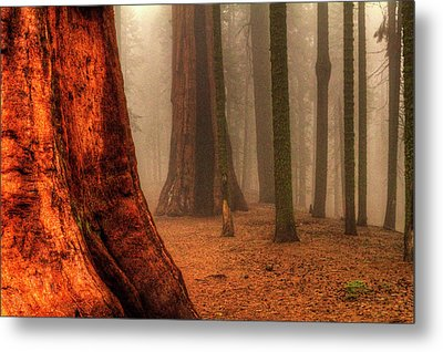 Sequoias Touching The Clouds Metal Print