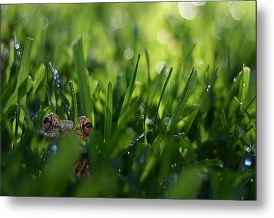 Metal Print featuring the photograph Serendipity by Laura Fasulo