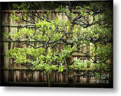 Serene Japanese Tree With Bamboo Fence Metal Print