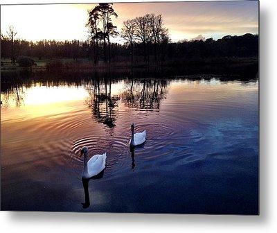 Serene Swans Metal Print
