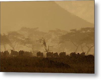 Serengeti Monsoon Metal Print