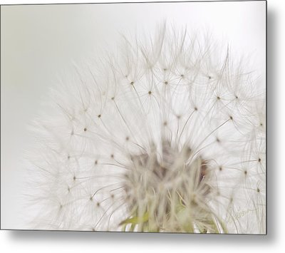 Serenity Metal Print by Kharisma Sommers
