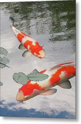 Metal Print featuring the photograph Serenity - Red And White Koi by Gill Billington