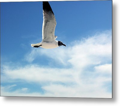 Serenity Seagull Metal Print by Marie Hicks