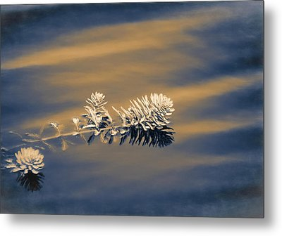 Metal Print featuring the photograph Set Apart by Carolyn Marshall